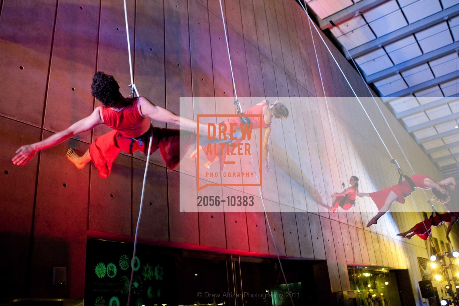 Performance By Project Bandaloop, Photo #2056-10383