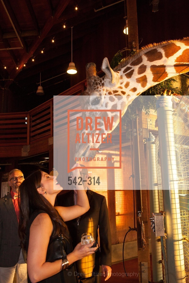 Aly Spradlin, San Francisco Zoo Fur Ball, San Francisco Zoo, September 25th, 2015,Drew Altizer, Drew Altizer Photography, full-service agency, private events, San Francisco photographer, photographer california