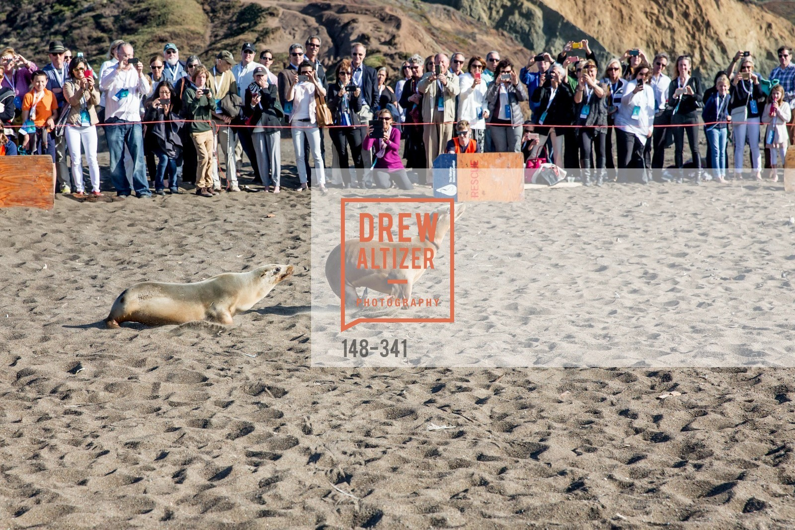 Atmosphere, The Marine Mammal Center 40th Anniversary, Fort Cronkhite. 200 Bunker Road, October 4th, 2015,Drew Altizer, Drew Altizer Photography, full-service agency, private events, San Francisco photographer, photographer california