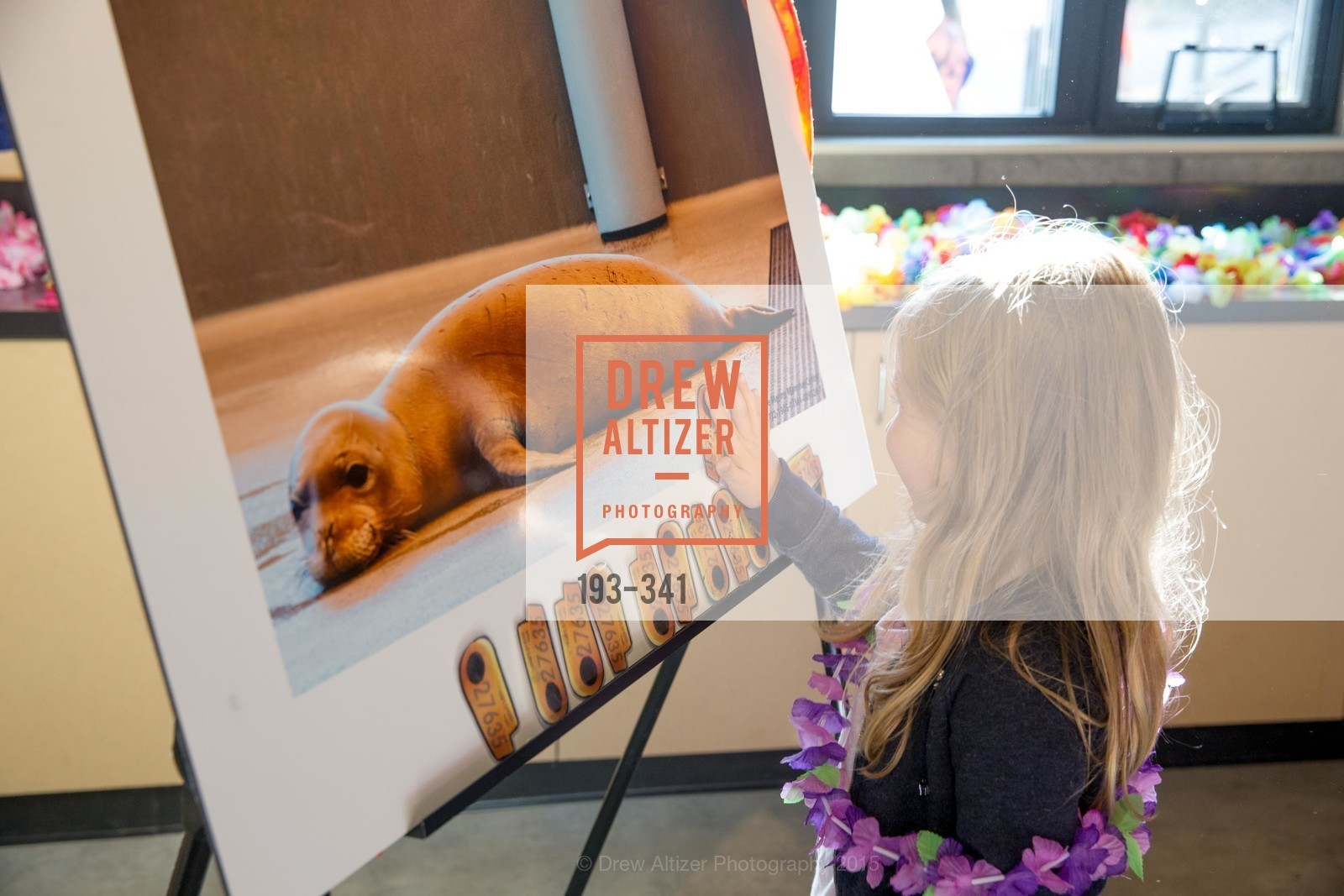 Top Pics, The Marine Mammal Center 40th Anniversary, October 4th, 2015, Photo,Drew Altizer, Drew Altizer Photography, full-service agency, private events, San Francisco photographer, photographer california