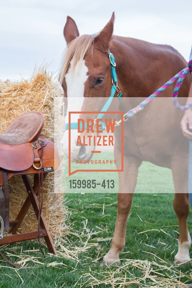 Atmosphere, A Harvest Barn Dance at Cornerstone Presented By Giant Steps Therapeutic Equestrian Center, Cornerstone Sonoma. 23570 Arnold Dr, October 24th, 2015
